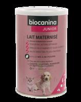 Biocanina Lait poudre maternisé B/400g à AMBARÈS-ET-LAGRAVE